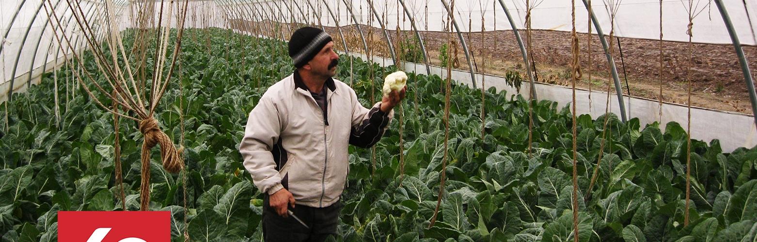 Bauer Mihael in Moldawien in seinem Gewächshaus mit Kohl