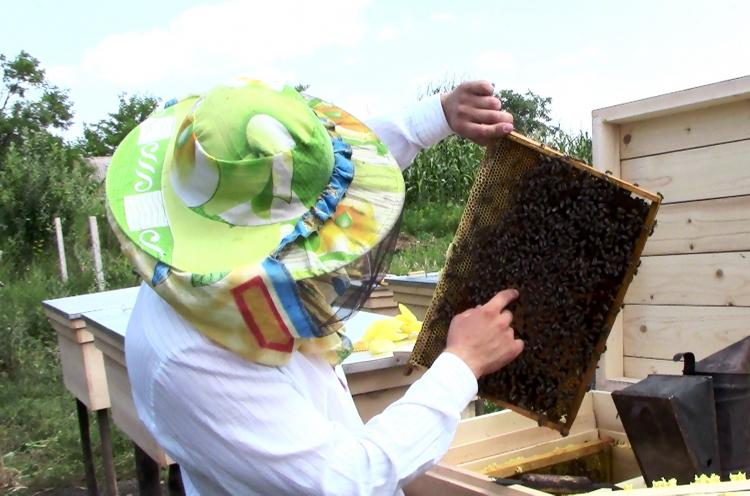 A young Moldovan man is working with his new beehives, which he could purchase with a loan received through OM Moldova's B4T (Business for Transformation) ministry. B4T helps Moldovans to start their own businesses, thus enabling them to provide for their